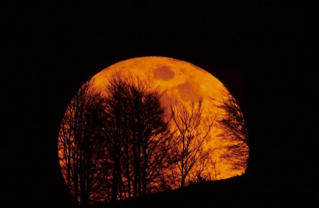 no281-luna-saliendo-arboles